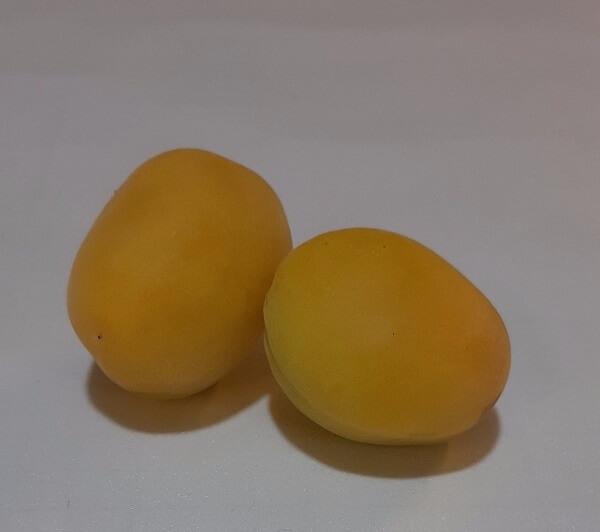 عکس زردآلو